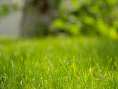 Lawn-Care-Maintenance-Toronto