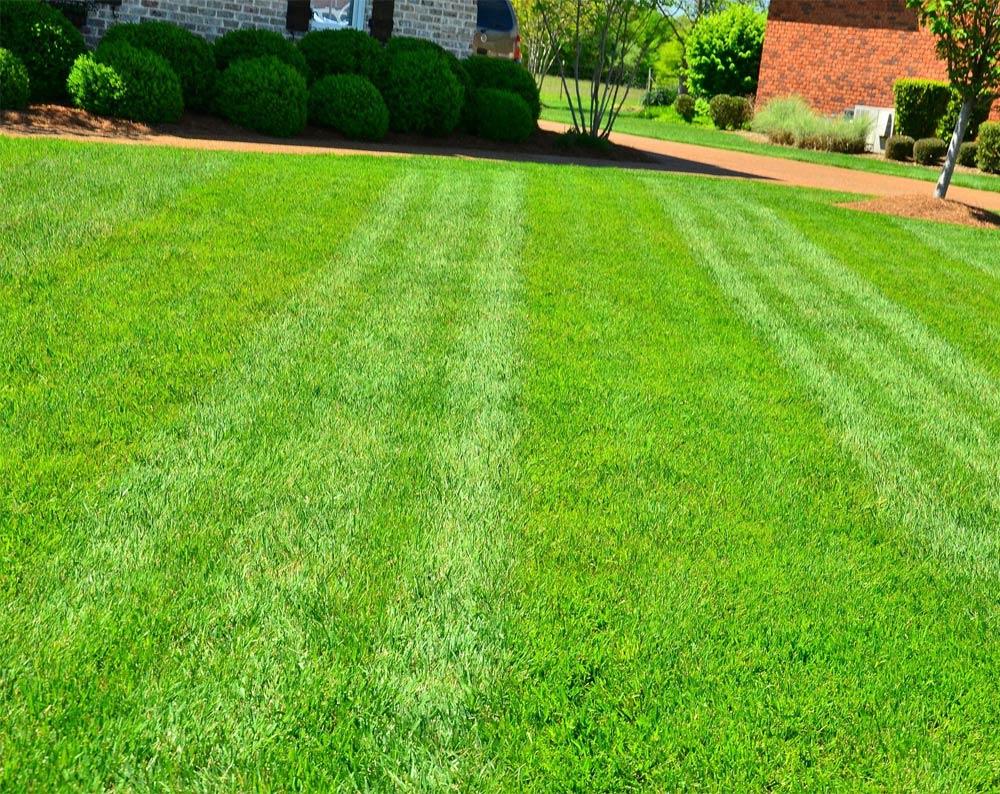 Lawn-Care-Maintenance-Scarborough